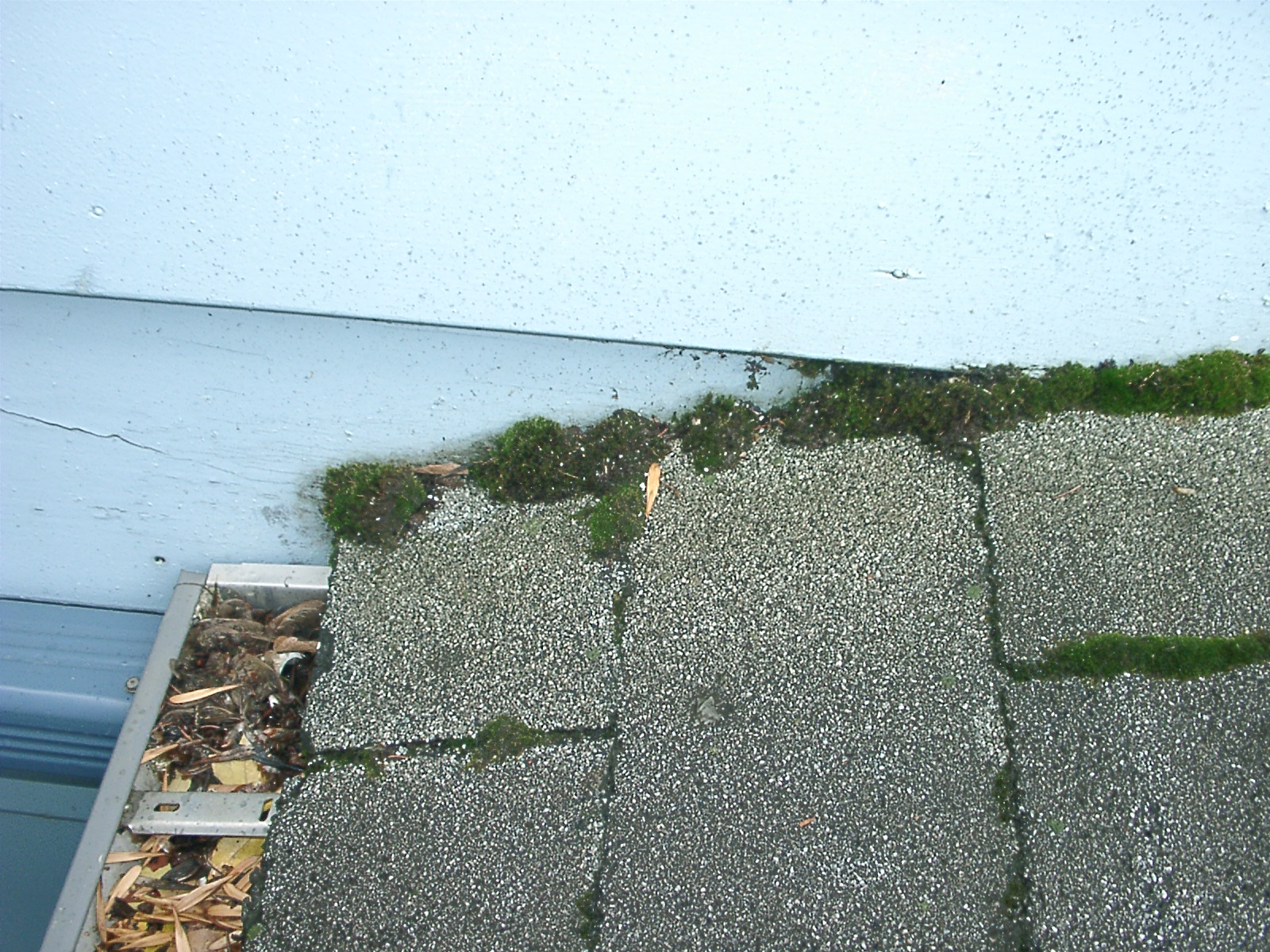 Why Do I Have Moss On My Roof Border Home And Property