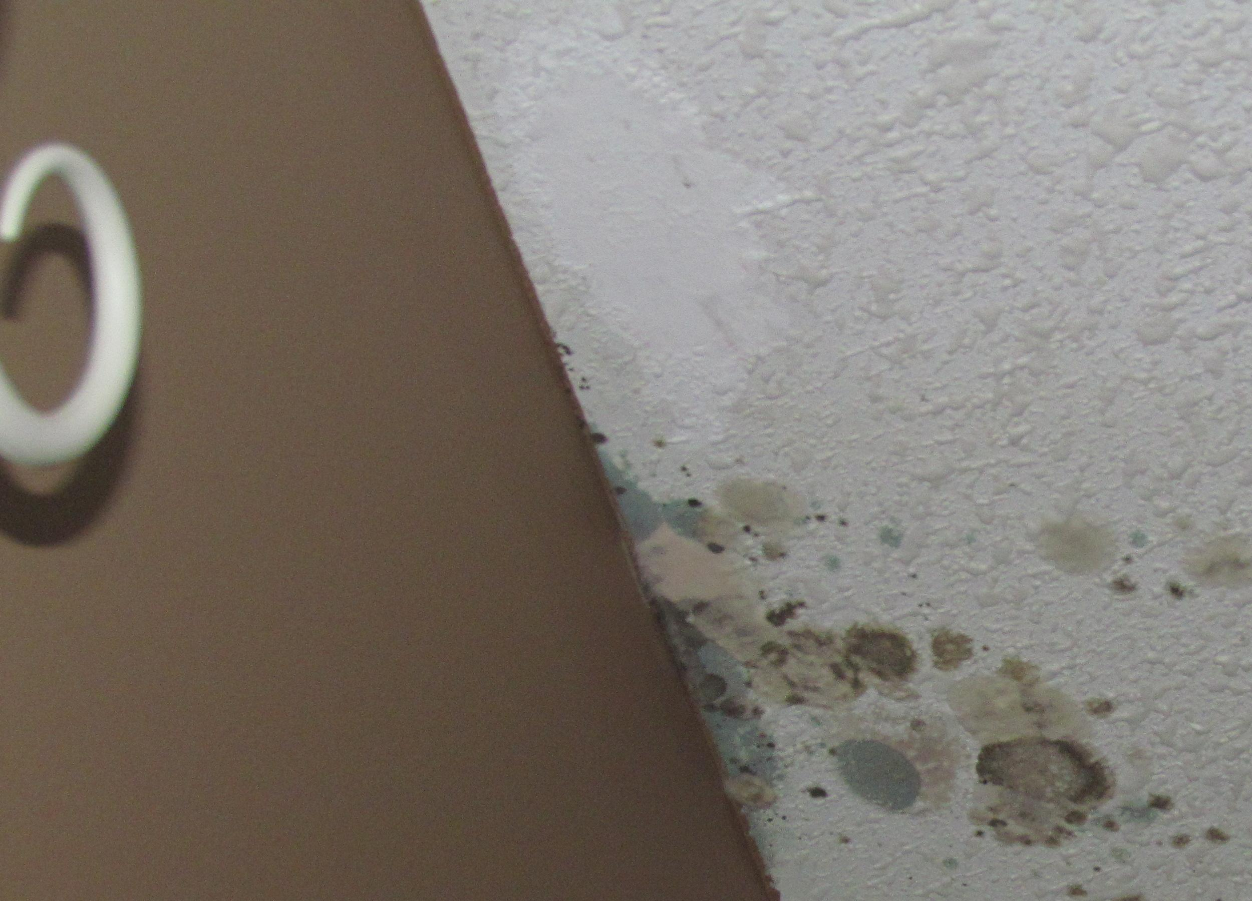 Mold caused by frost in the attic