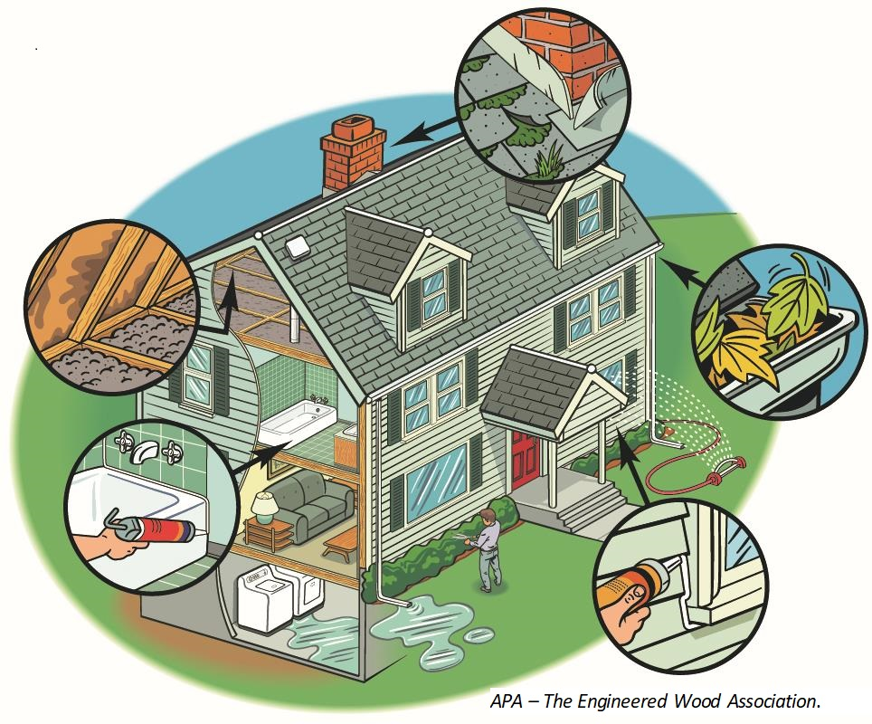 Illustration of a house with circles showing close-ups of specific mold inspection services