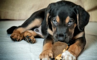 9 Home Cleaning Tips for Pet Owners